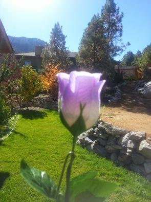 purple plastic rose